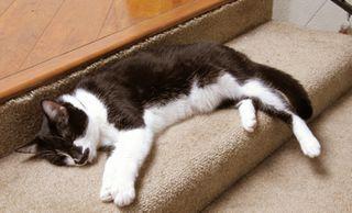 MW_Sleeping